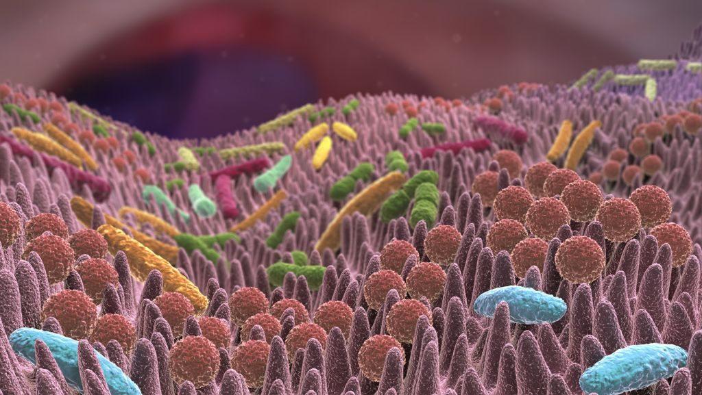 Eine gestörte Darmflora kann viele Krankheiten verursachen. (Foto: Alex/fotolia.com)